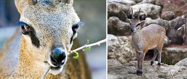 Пять животных обладающих суперспособностями