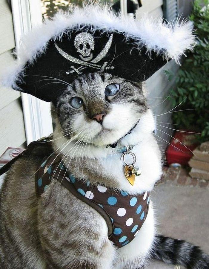 Как определить пол котенка. 5 эффективных методов с фото ...