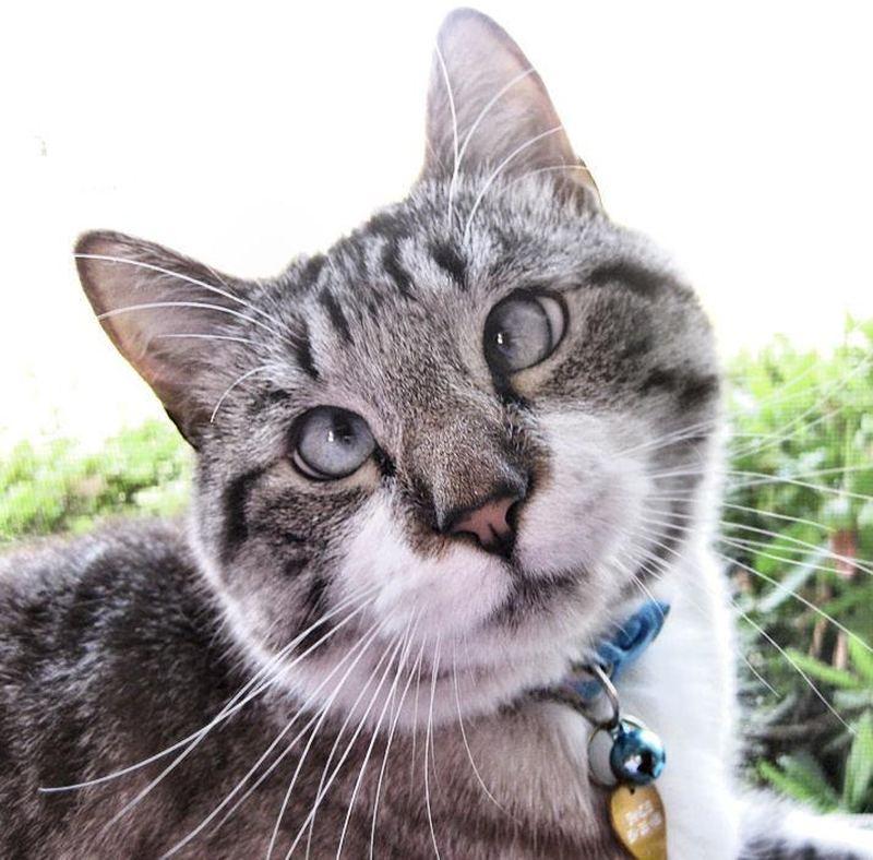 Косоглазый кот Спанглс стал звездой интернета