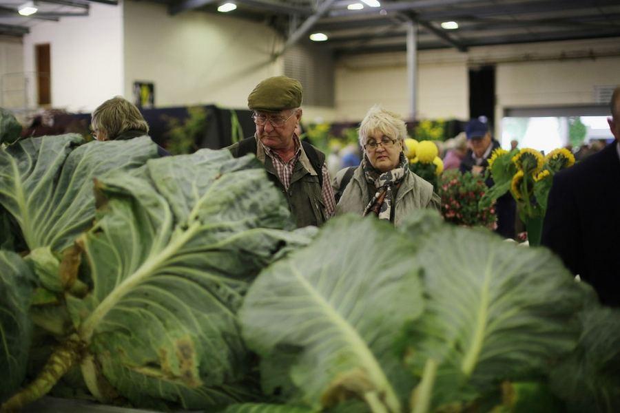 Гигантские овощи на фестивале урожая Harrogate Flower Show