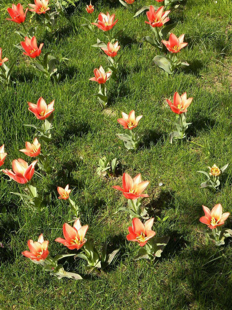 Сады в поместье Клода Моне в Живерни