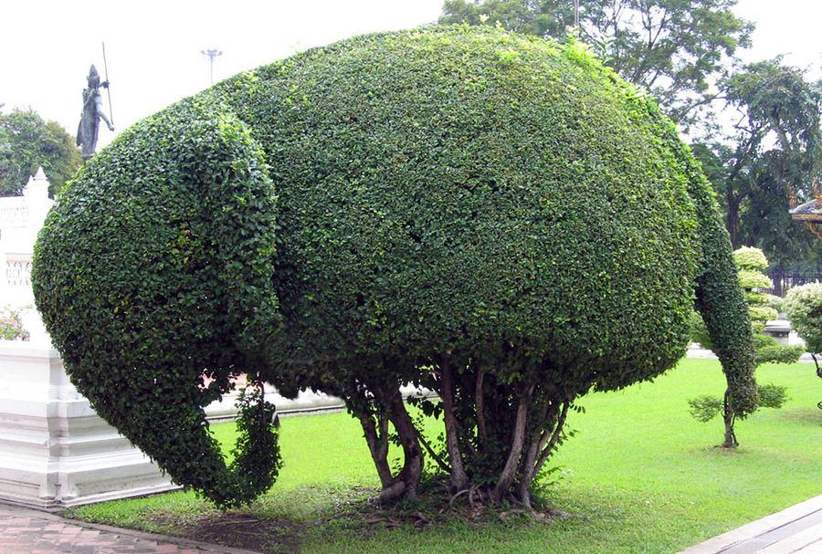 Искусство фигурной стрижки деревьев