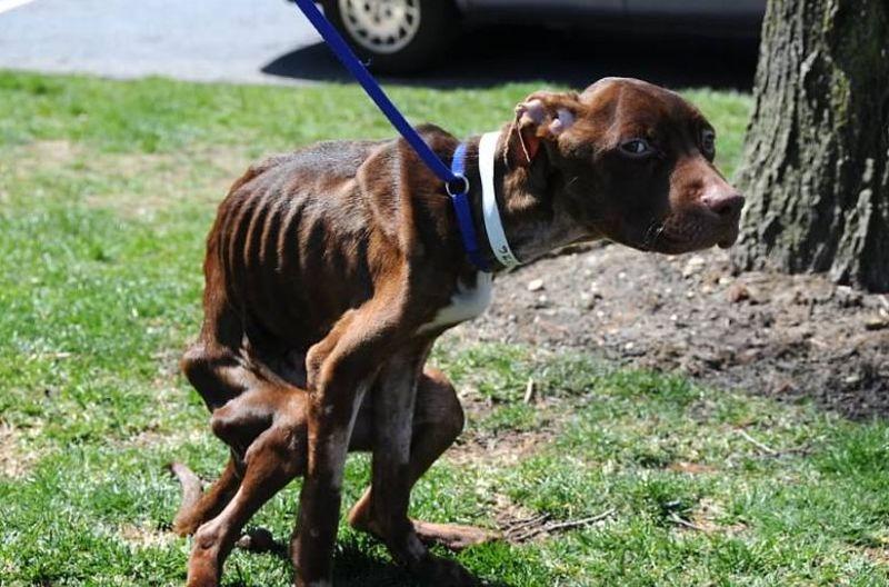 Возвращение к жизни, или история спасения выброшенного в мусоропровод пса