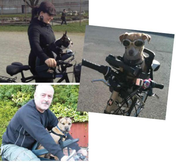 Велосипедное кресло для путешествий с четвероногим другом