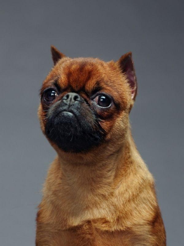Почему так много различных пород собак