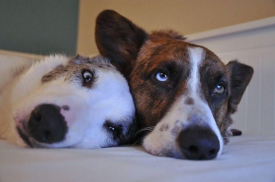 Смешные и милые собаки
