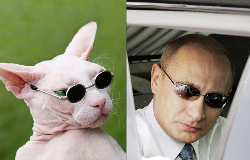 Foreign Policy подобрал Путину двойников среди лысых кошек