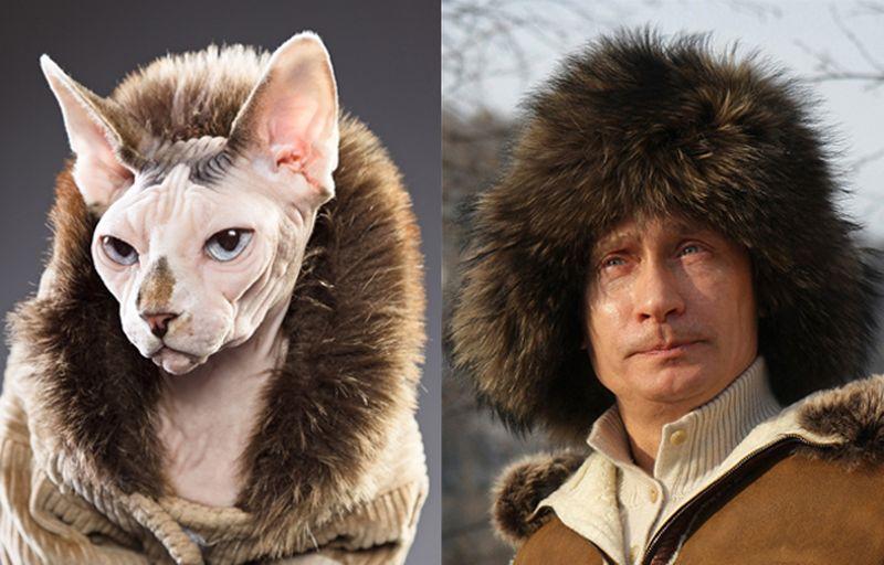 14 лысых кошек, которые выглядят как ...: animalworld.com.ua/news/14-lysyh-koshek-kotoryje-vygljadjat-kak...