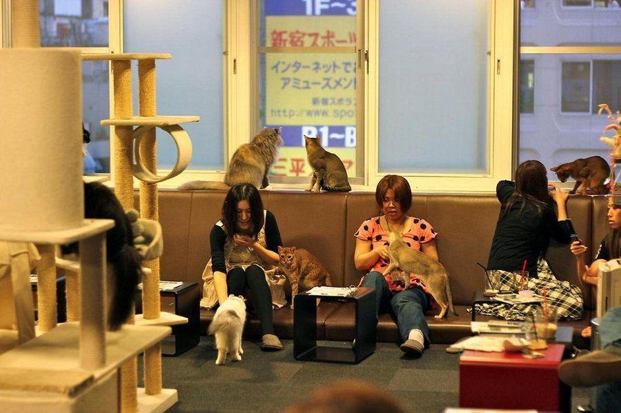 Кафе с кошками в разных странах мира