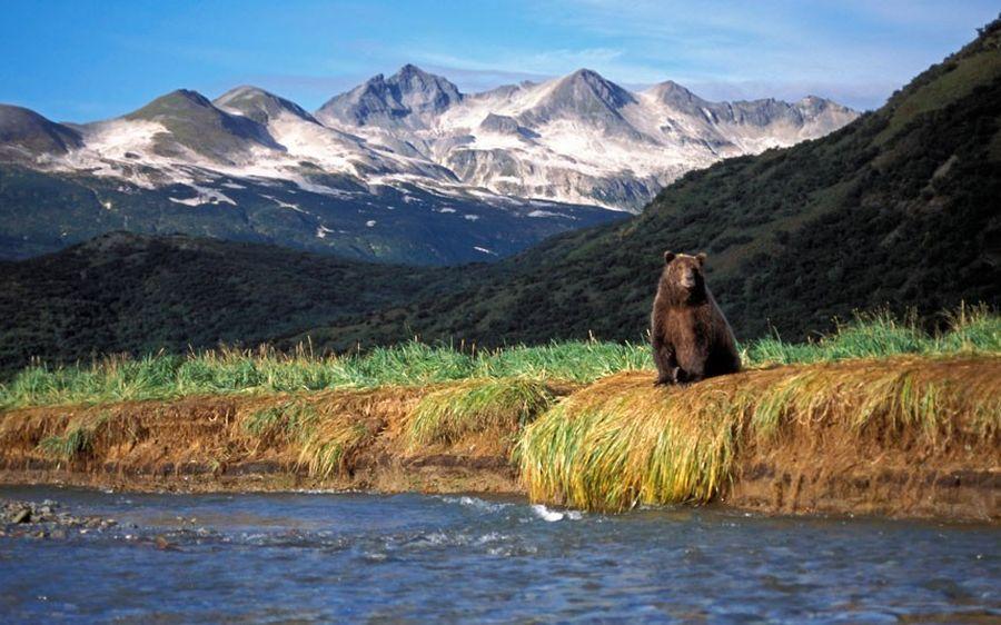 Країна ведмедів