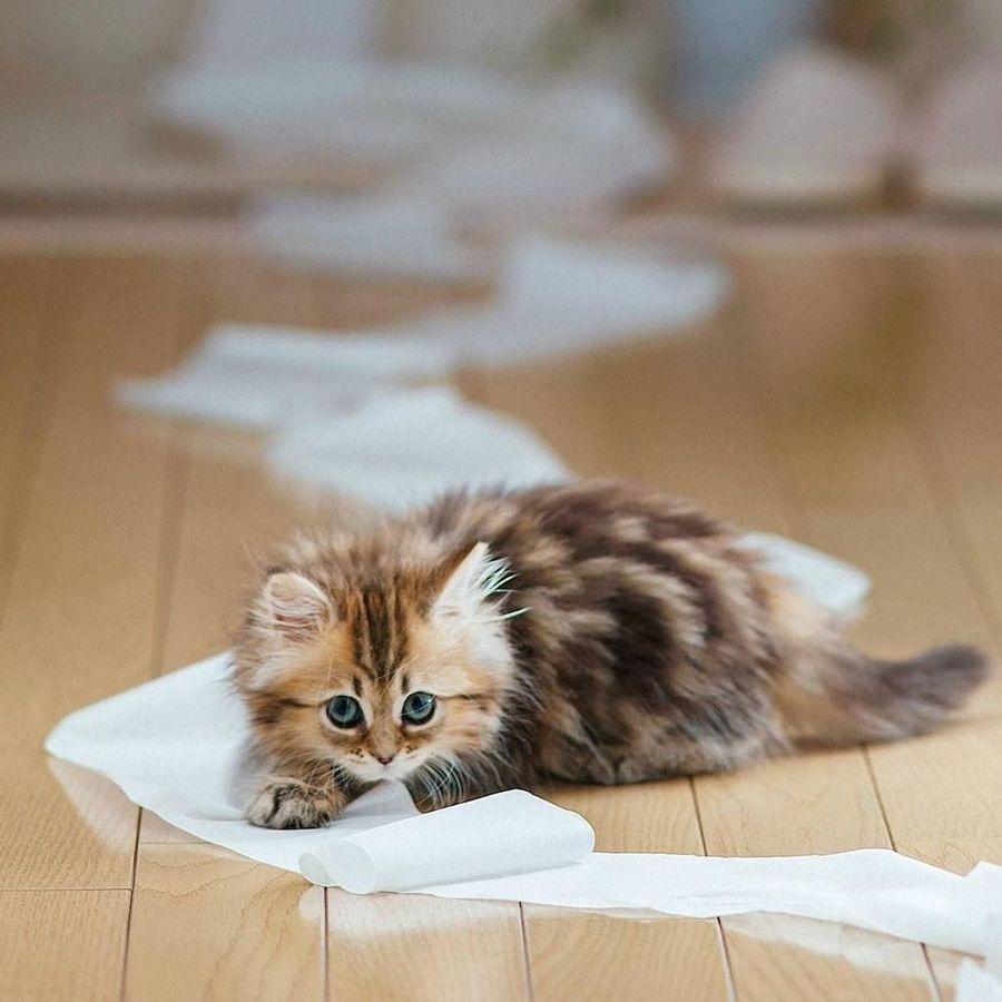 картинки кошек смотреть милых