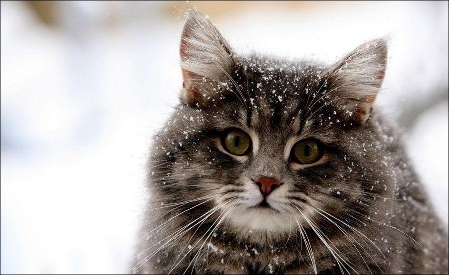 Зимние забавы кошек