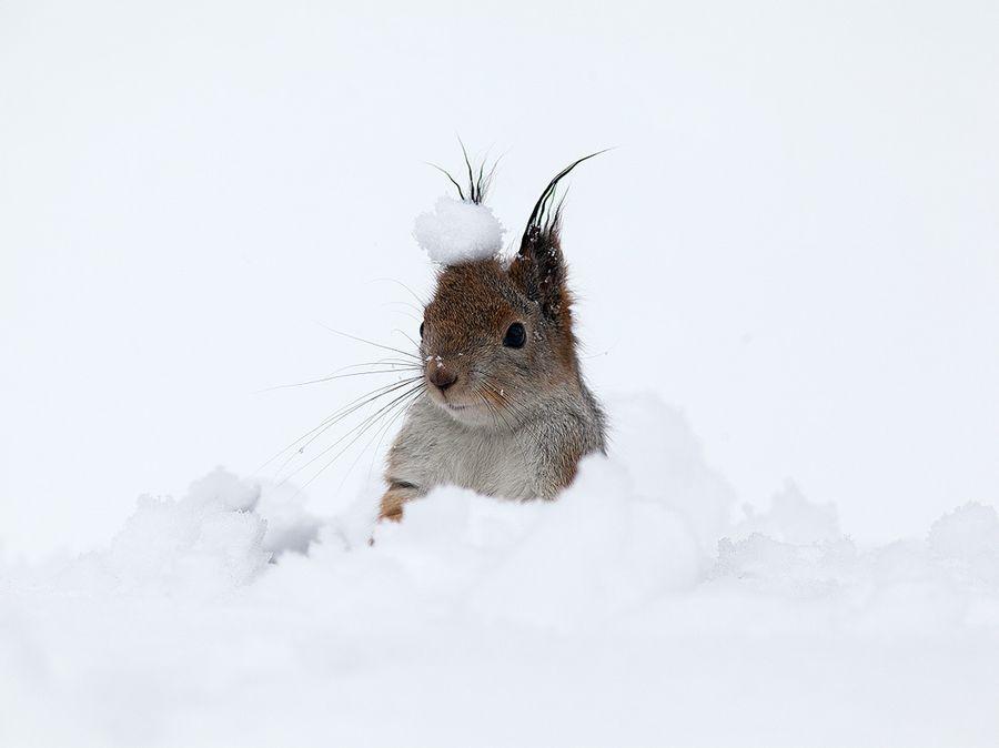 Лучшие фотографии по версии National Geographic (декабрь)