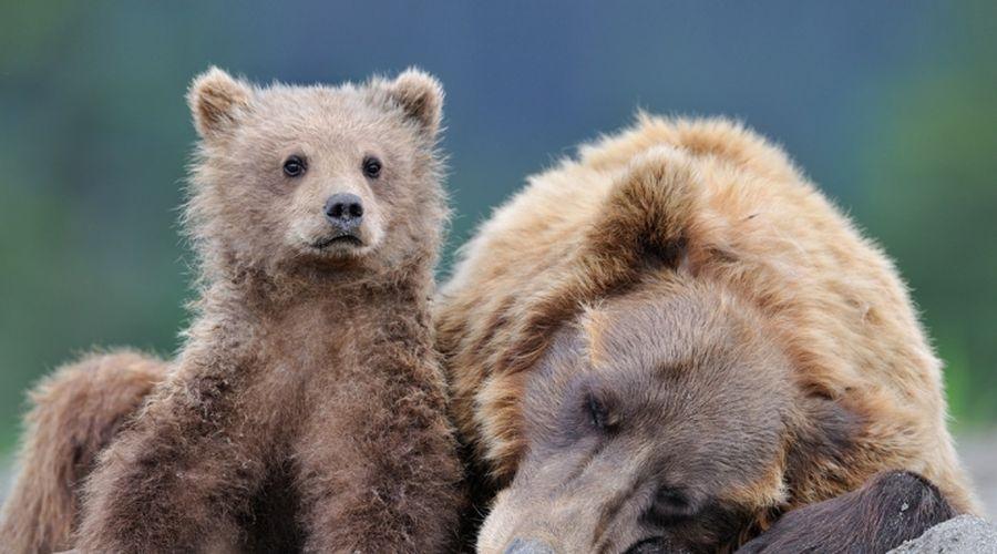 Фотограф дикой природы Николай Зиновьев