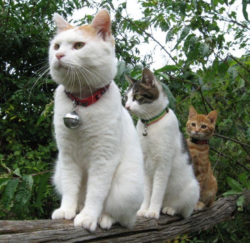 猫貼り消え失せろ!@ぱん◯らアップ板 [無断転載禁止]©bbspink.com->画像>1805枚
