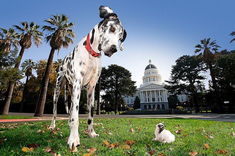 Самая высокая собака немецкий дог и