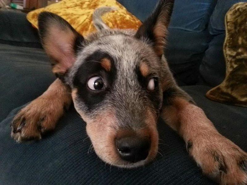Как выбрать для собаки кличку