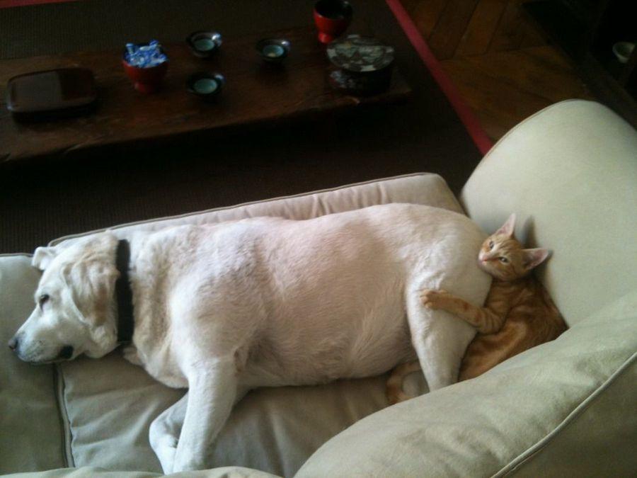 Смешные и милые кошки