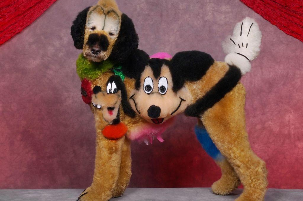 В Нью-Джерси состоялся конкурс по грумингу собак