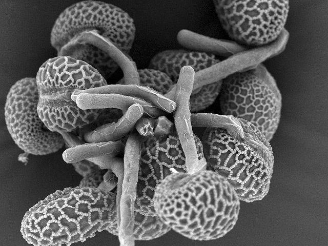 Пыльца из космоса порно