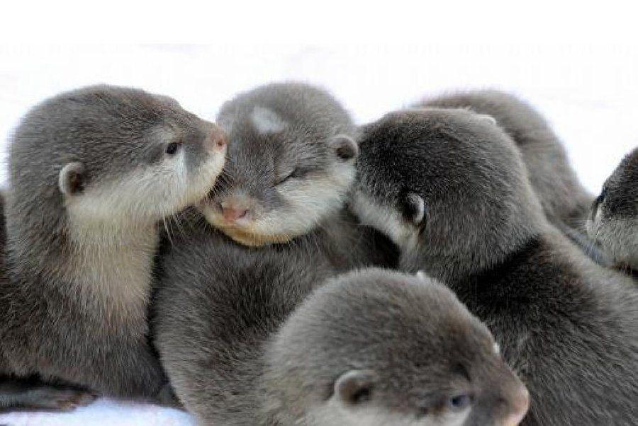 Смешные и милые животные