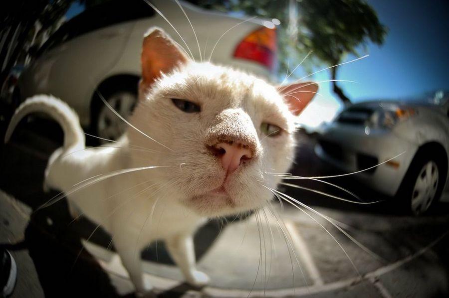 картинки кошек  про очень смешные