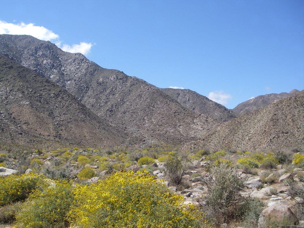 Цветущая пустыня Анза Боррего, Калифорния