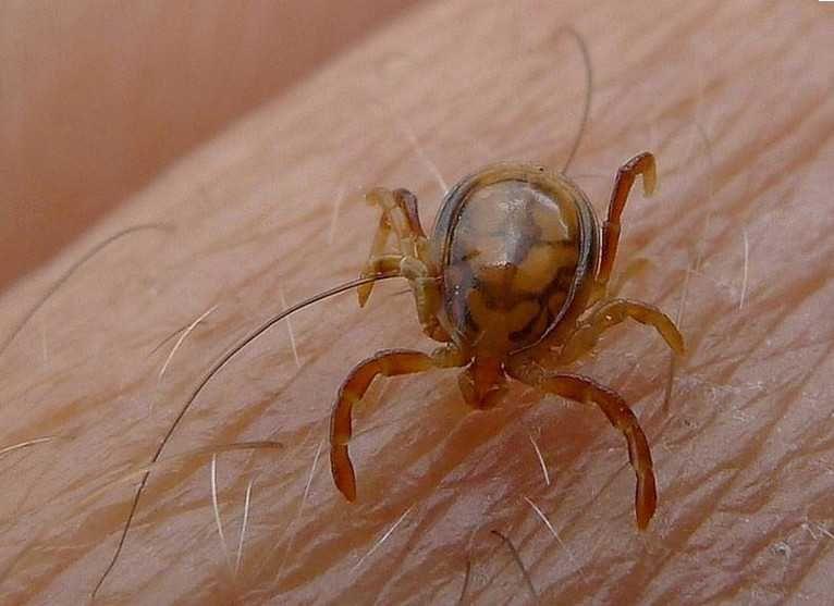 Биолог вернулся из Африки с неизвестным паразитом в носу