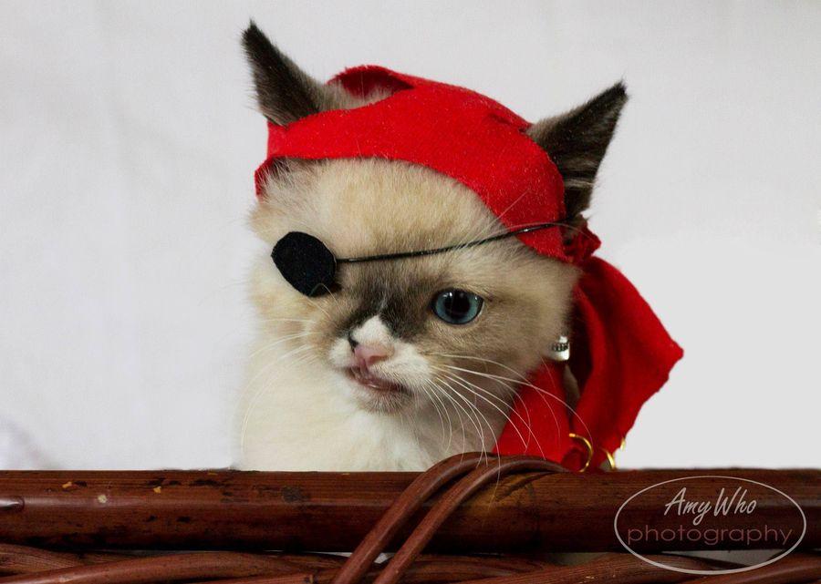 Котенку-пирату из приюта решили подыскать новых хозяев