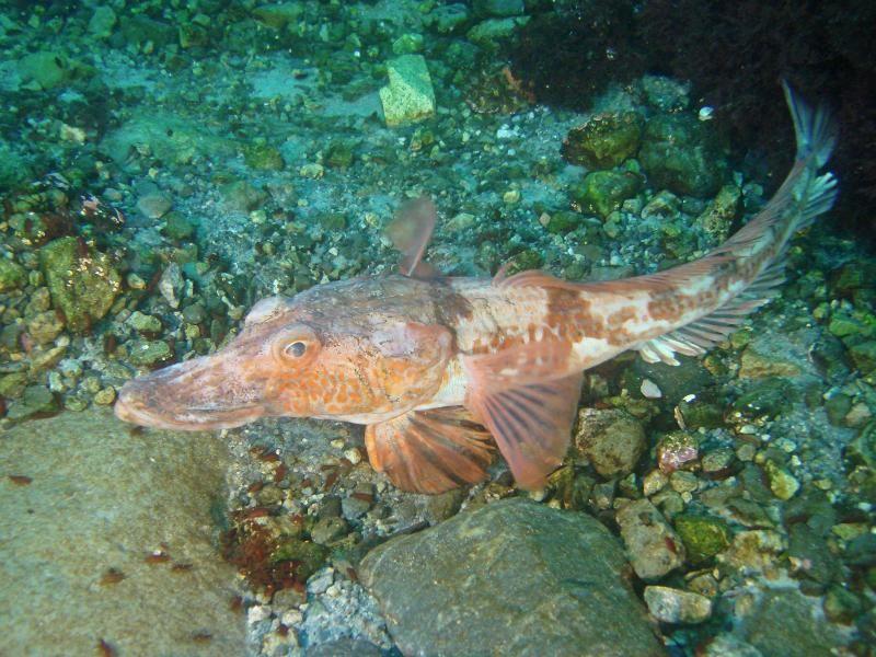 рыб в всех антарктиде фото