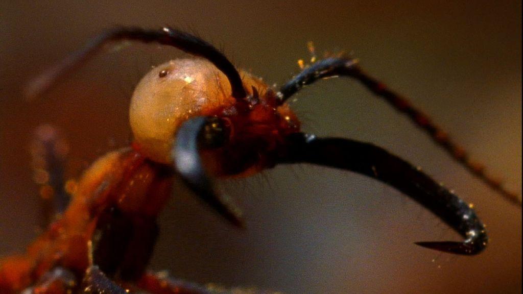 жук олень насекомые и их знакомые