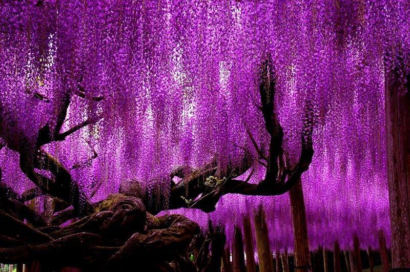 фото самых красивых цветов: