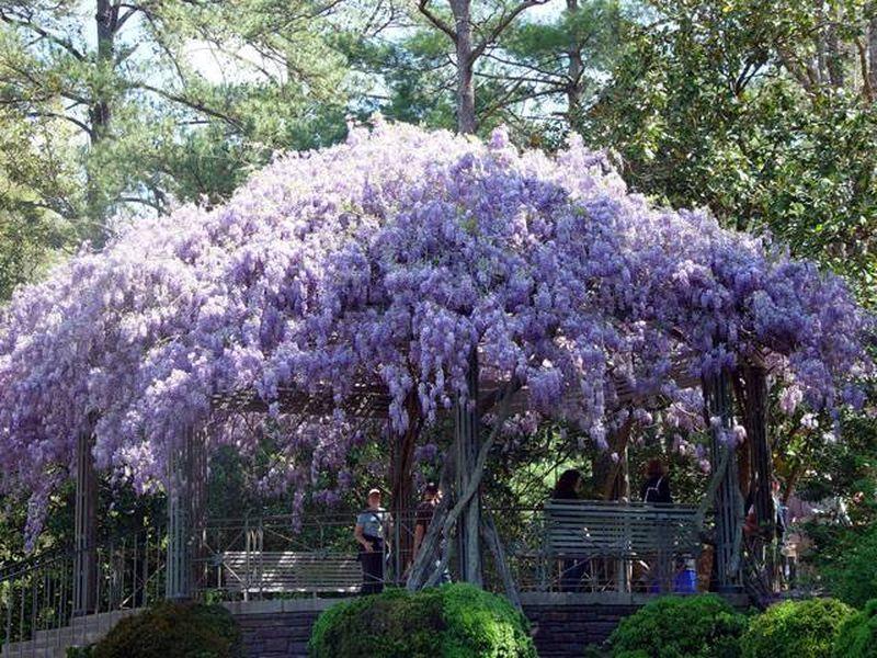 10 самых ароматных цветков