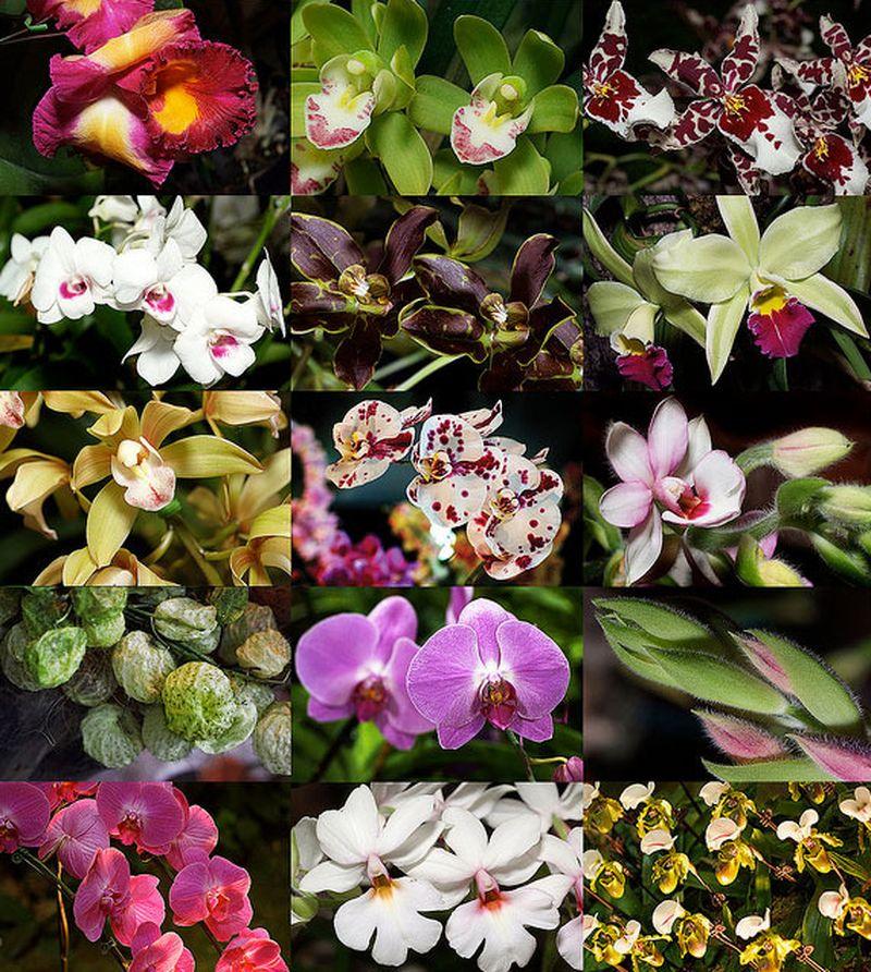 Десять самых очаровательных цветков