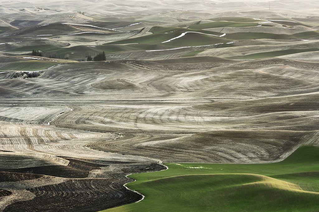 Изумрудные холмы Палуз (Palouse)