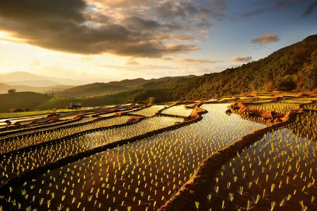 Рисовые террасы Чиангмай