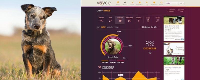 Как носимые электронные технологии меняют жизнь собак