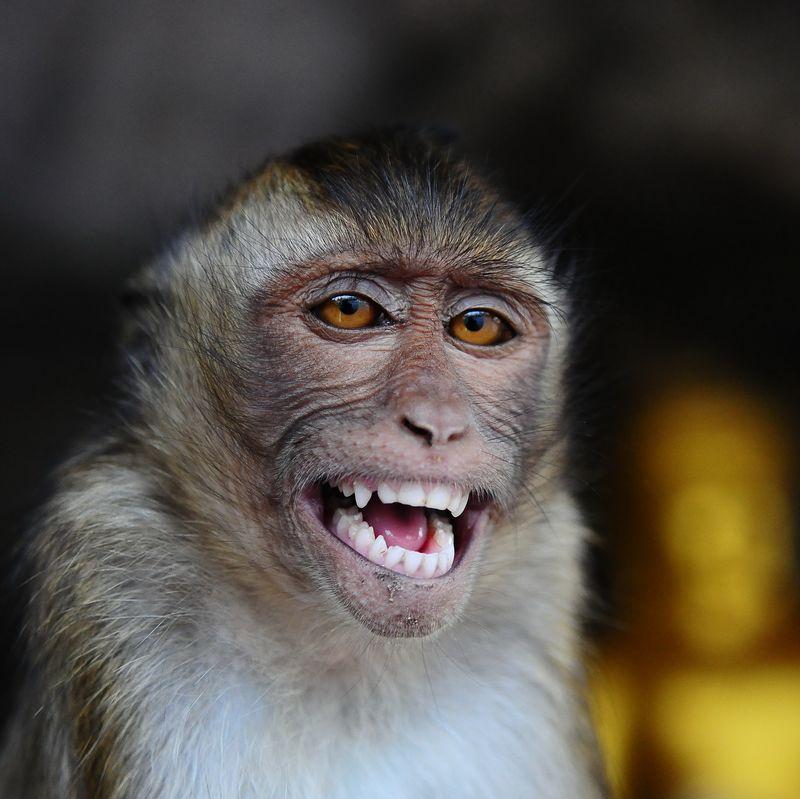 Почему животные не улыбаются?