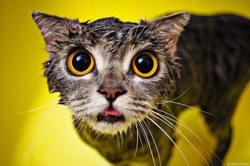 Купание кота, как вид боевого искусства