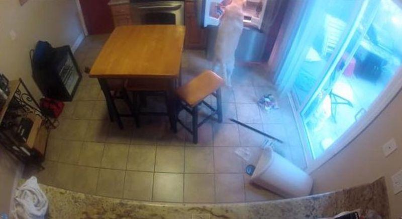 одна дома камера