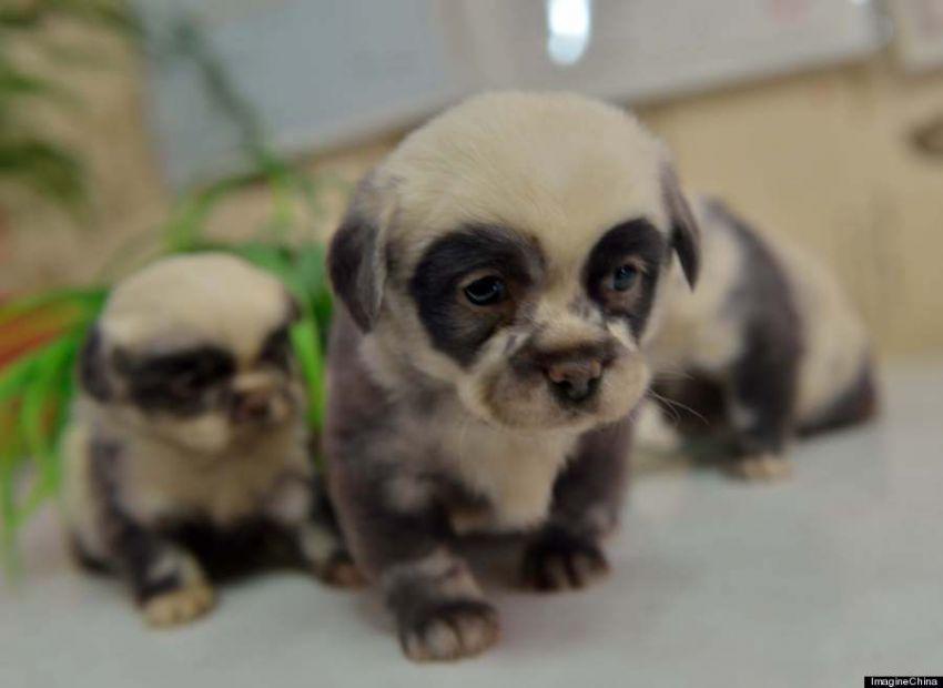 Однажды ваш ребёнок просит собаку | Пикабу | 620x850