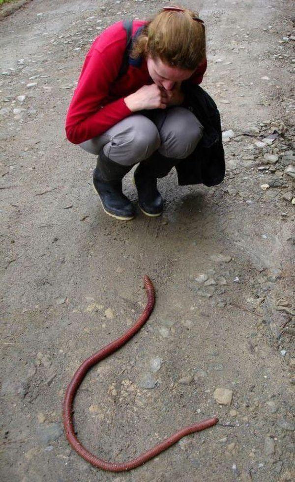 Смотреть порно черви в 2 фотография