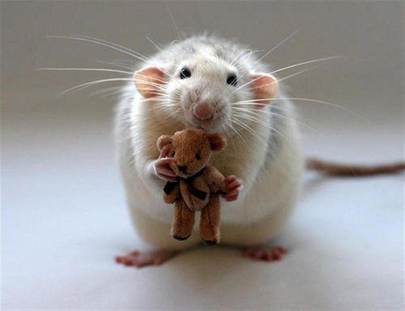 Изделия из металла Простые штуИгрушка для крысы