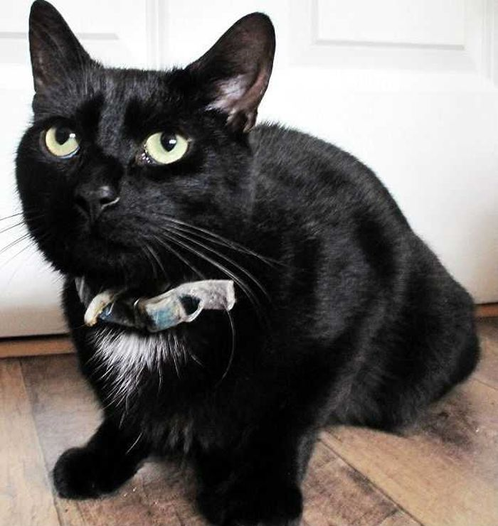 Как кот Маркиз спас хозяина - Комсомольская правда