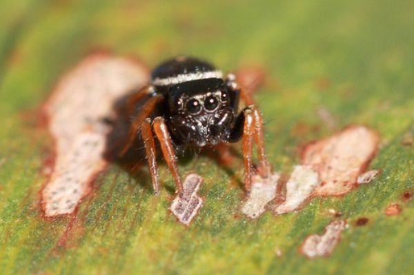10 самых причудливых пауков