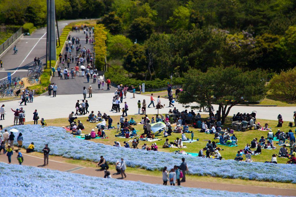 Лазурная сказка: Парк Hitachi Seaside Park