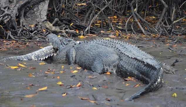 Я крокодил сон