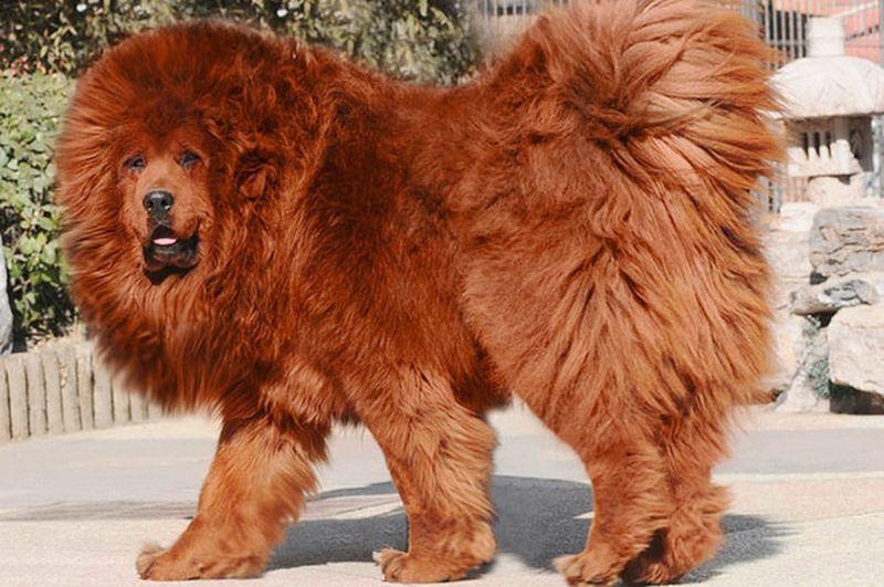 Фото самых дорогих животных в мире