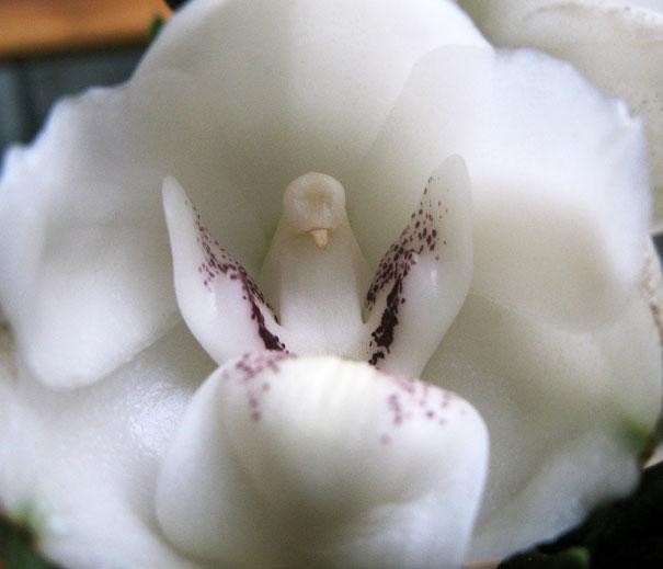 flowers-look-like-animals-people-monkeys-orchids-pareidolia