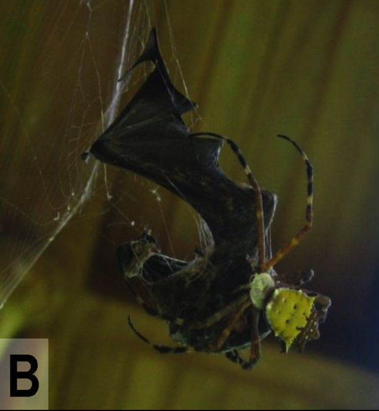 приснились что ловлю паука